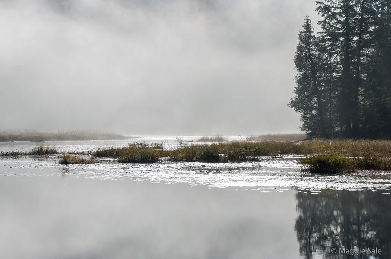 Algonquin morning mist on river