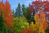 Fall colours in Chutes Provincial Park