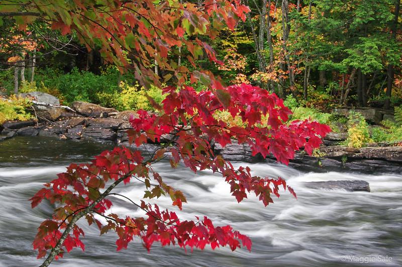Oxtongue River near Dwight