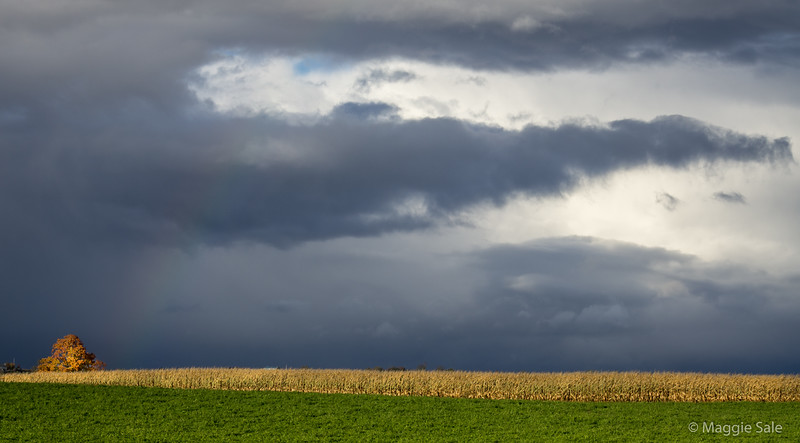 Storm clouds over corn field near Creemore
