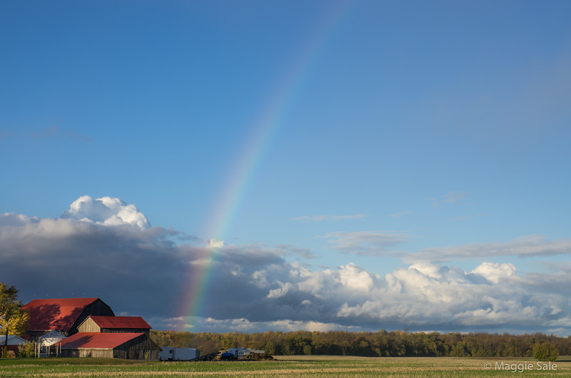 Rainbow over red barn near Collingwood