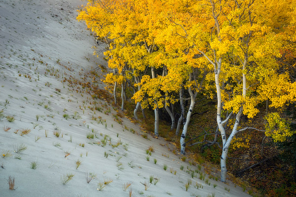 "<i>Fall Colour on the edge of the smallest desert in the world,<br> Carcross desert,<br> <font size=""1"">Yukon Territory, Canada</font></i>"