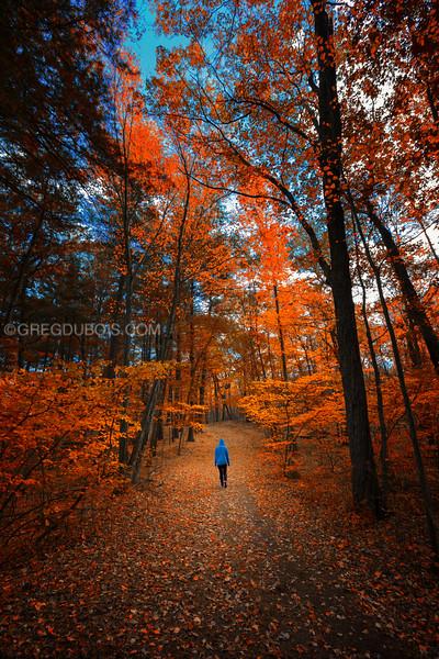 Walking through Stony Brook Reservation in Fall, West Roxbury Boston Massachusetts