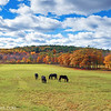 Salisbury Massachusetts Farmland with Horses Grazing on Fall Day with Cloudy Blue Sky