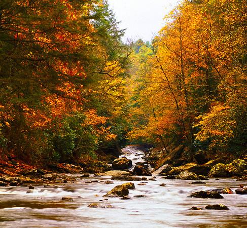 Fall Colors In North Carolina