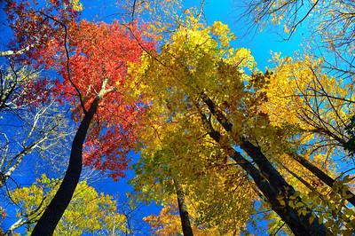 The Colors Of North Carolina Fall