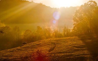 North Carolina Mountain Fall Sunrise