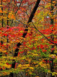 Blaze Of Fall