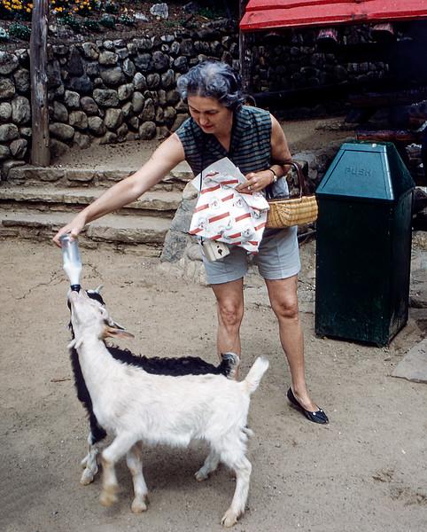 North Pole, NY - Mom feeding milk to goats - 1961