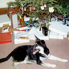 Skylla's first Christmas - 1971