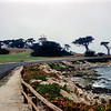 Monterey Peninsula - Cyprus trees along the ocean drive - 1964