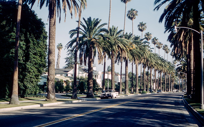 Los Angeles - Palm tree lined street - 1964