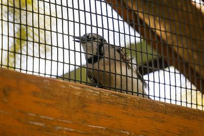 Si-Sept 2021 (Cosley Zoo)-012