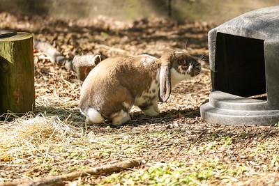 Si-Sept 2021 (Cosley Zoo)-015