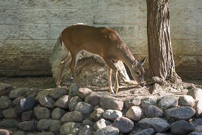 Si-Sept 2021 (Cosley Zoo)-009