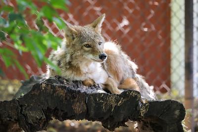 Si-Sept 2021 (Cosley Zoo)-005