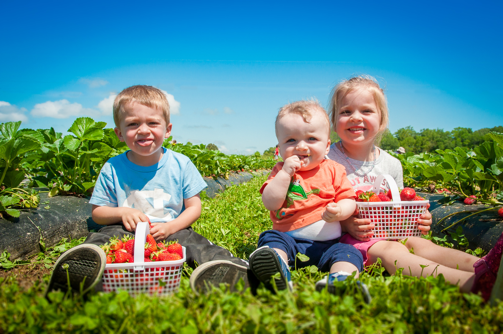 Three Kids in the Strawberry Bushes - May 9