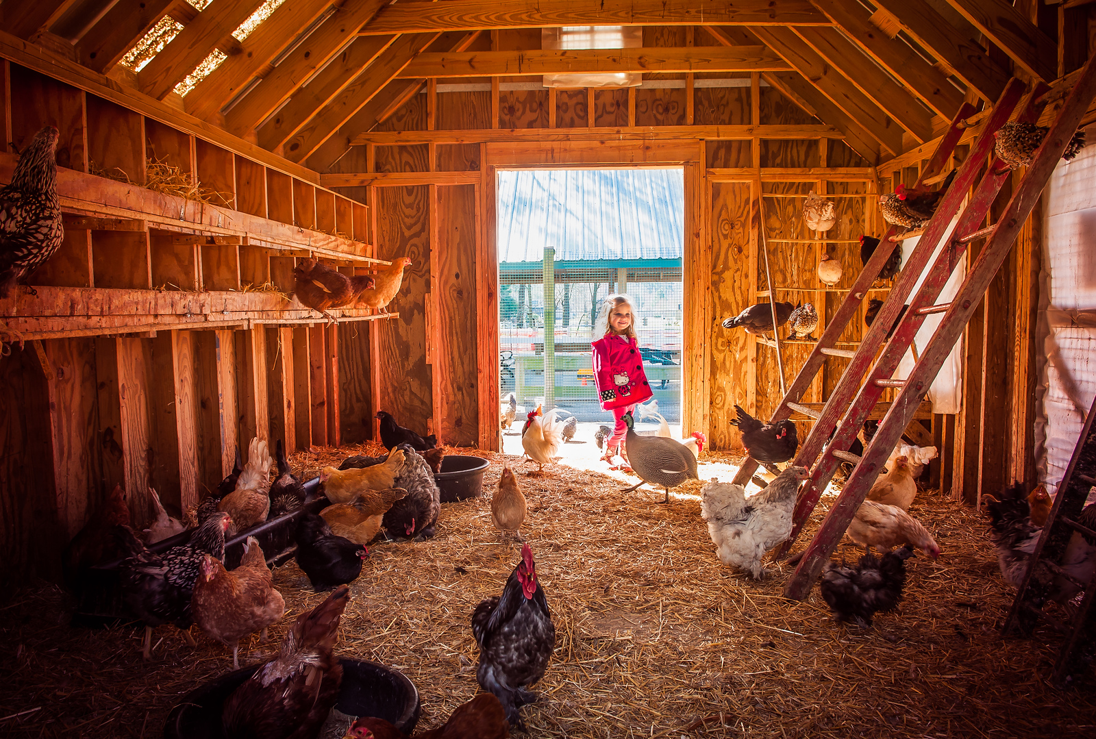 In the Chicken Coop - March 21