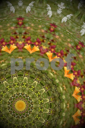 Wildflower Kaleidoscope