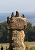 Group of chelada baboons sitting on top of a rock overlooking town in the distance, Zuerich, Switzerland