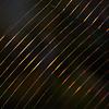 Spider's web reflecting sunlight