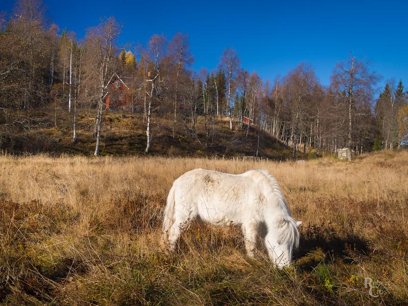 Unicorn of the Nordmarka