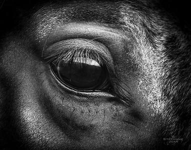 Eye am