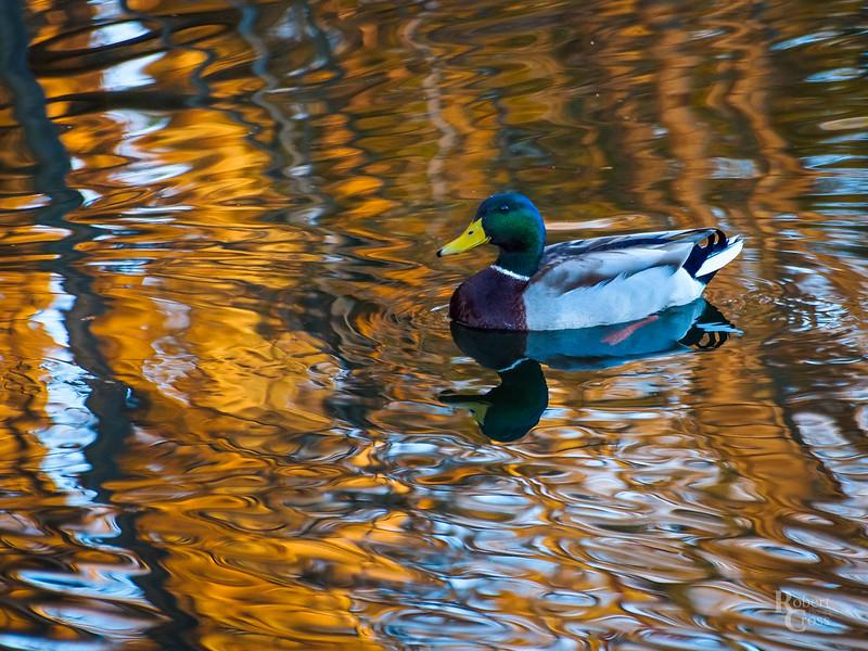 Duckwater Sunset
