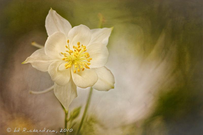 Faux Daffodil