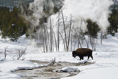 Bison Refuge