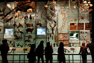 Hall of Biodiversity, American Museum of Natural History, New York City