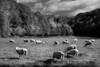 Pastorial Scene copy