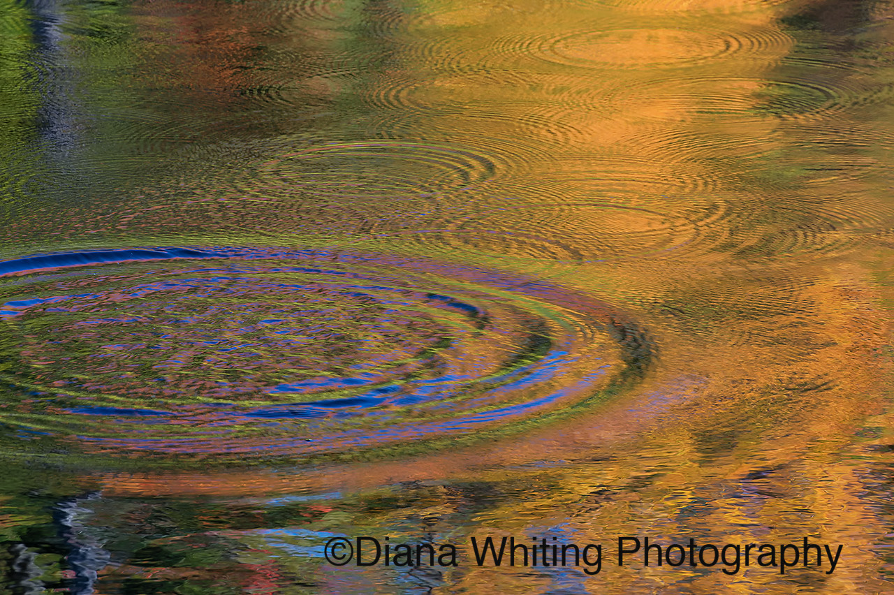 Reflections From Raindrops Creating Ripples of Colors in Fall Refections
