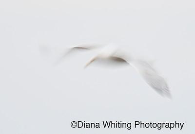 Abstract Gull_DSC5775