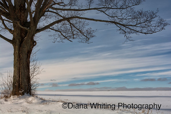 Winter Skaneateles