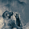 The Thinker: Lowland African Gorilla, San Diego Zoo