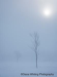 Skaneateles Winter Landscape