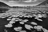 Labrador Pond_DEW4987 copy