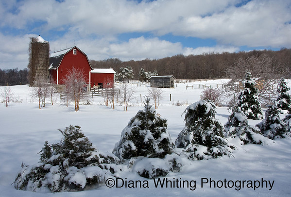 Finger Lake Farm Winter