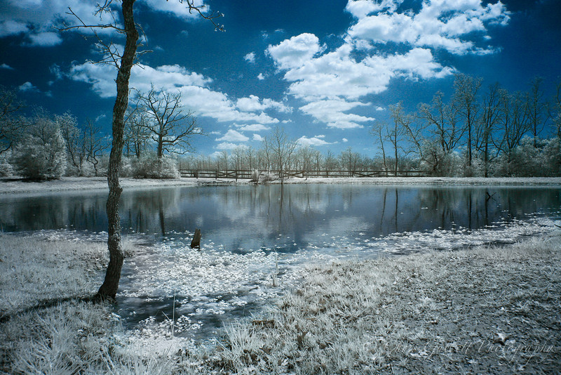 Pond in Infrared