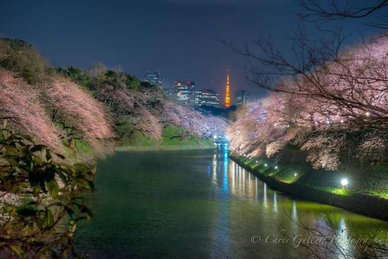 Chidorigafuchi By Night