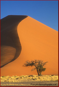 Sands of Namibia John Chapman.