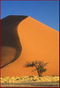 Sands of Namibia John Chapman.