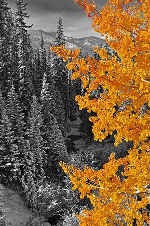 A Fall Sillhouette