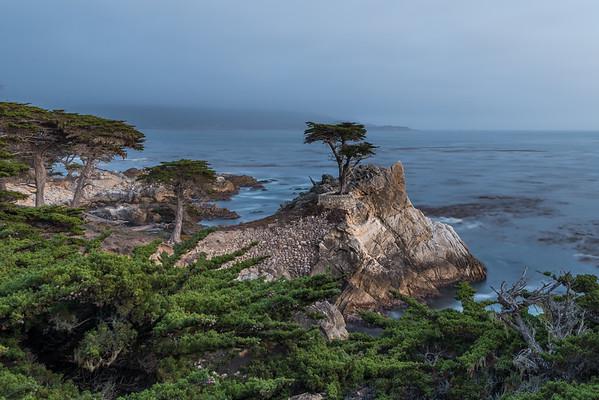 Lonely tree Pebble Beach California