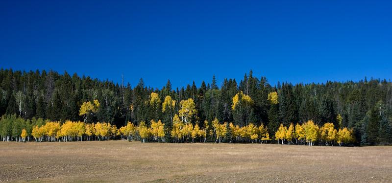 Along Highway 67 (North Rim - Grand Canyon National Park)