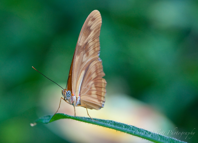 Butterfly On A Sea Of Green