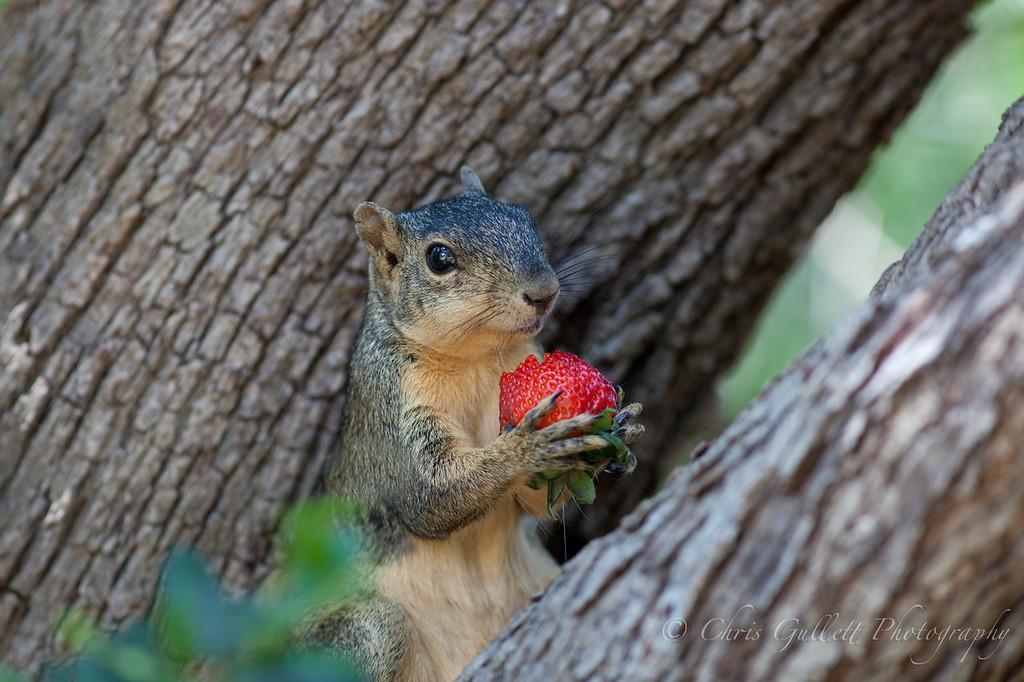 Mmmm Strawberry