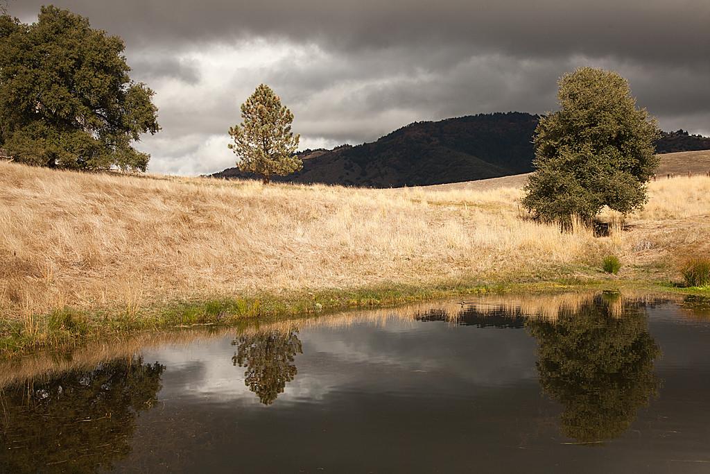 Quiet Pond