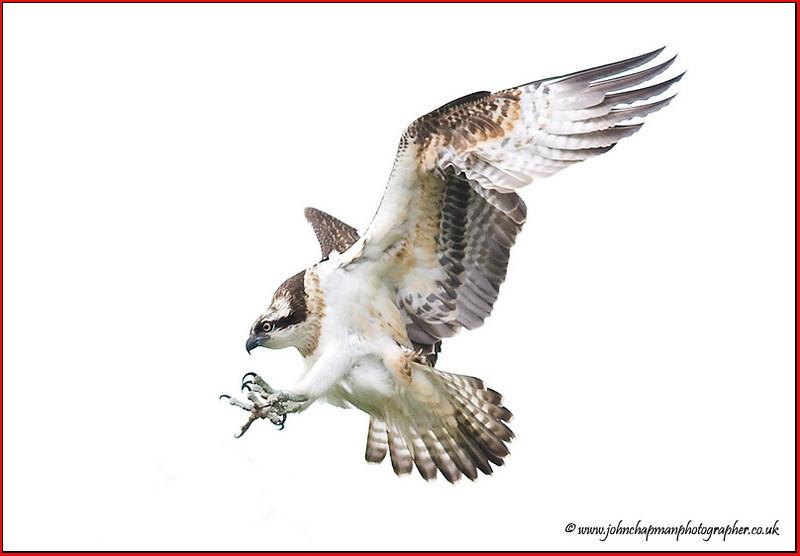 Osprey High Key.